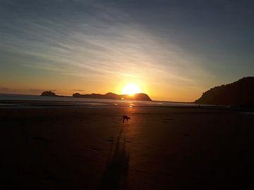 Kangoeroe op het strand zonsopkomst von Bianca Bianca