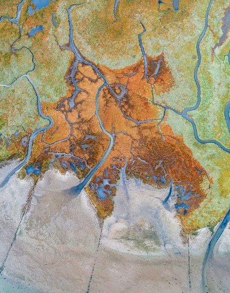 Texel - Le rauque - Red Marsh samphire 01 sur Texel360Fotografie Richard Heerschap