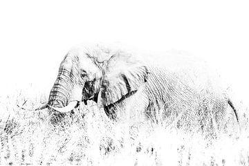 Elefantenbulle im Gras von Robert Styppa