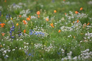 Blumenwiese von Petra De Jonge