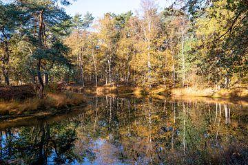 Bosmeer met prachtige reflecties van herfstkleuren van gouden bladeren in de herfst in de Utrechtse  van John Ozguc