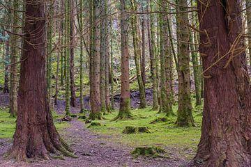 Het Grote Enge Bos in kleur van Peter Schütte