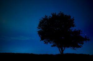 Boom bij nacht