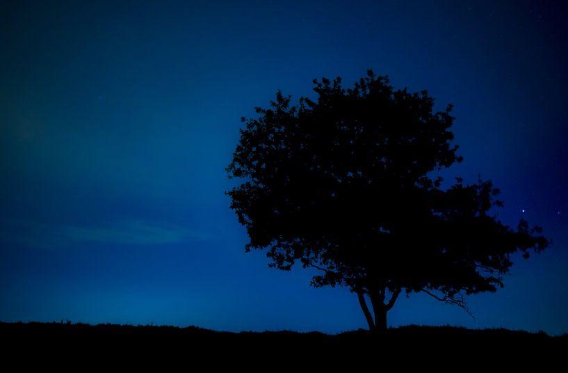 Boom bij nacht van Steven Groothuismink