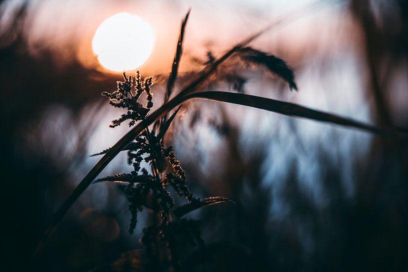 Zonsondergang van Chris Koekenberg
