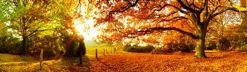 Herbstlandschaft bei Sonnenaufgang von Günter Albers