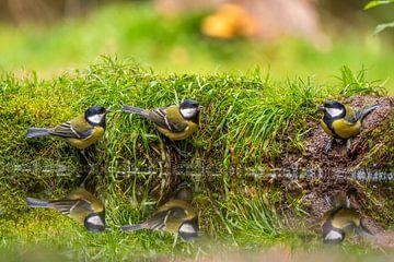 vogels aan de waterkant van Rob Bout