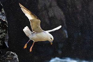 Noordse Stormvogel (Fulmarus glacialis auduboni) van Beschermingswerk voor aan uw muur