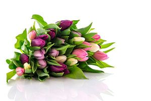 bos gekleurde tulpen