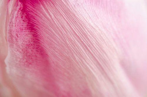 Tulp van dichtbij