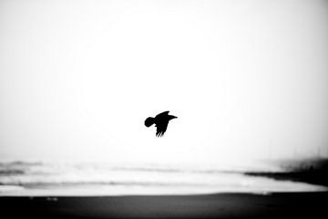 Zwarte kraai Noordzee van Remke Spijkers
