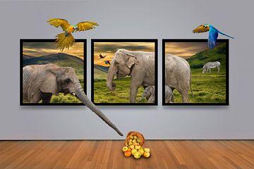 Africa Gallery van