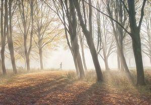 Runner dans la forêt