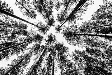 Treffen mit Bäumen von Ellis Peeters