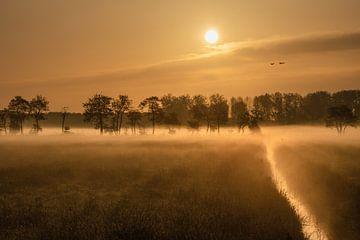 Een vroege ochtend met mist in de Betuwe van Anges van der Logt