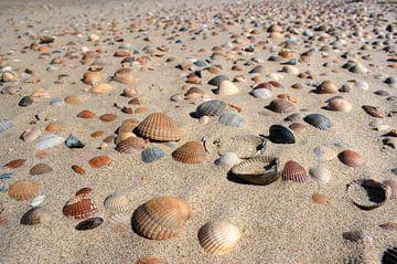 Schelpen op het strand Zeeland van MSP Canvas