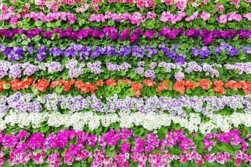 Horizontale rijen van bloemen in verschillende kleuren van