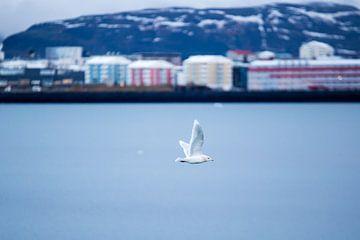 Meeuw boven de baai in Reykjavik van Marcel Alsemgeest