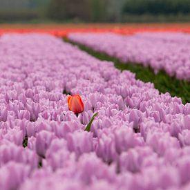 Eenzame tulp van Bart Bokslag