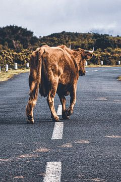 Die Kuh auf Wanderschaft von Nadine Rall