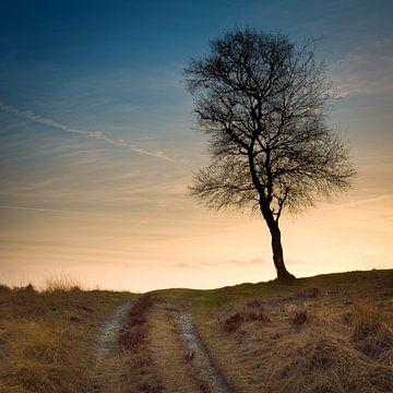Einsamer Baum auf dem Hügel von @ GeoZoomer