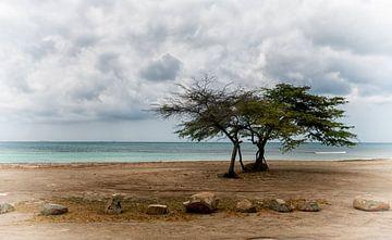 Aruba von Melien Suranno