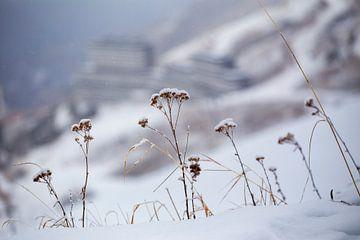 sneeuwbloemen von kees wolthoorn
