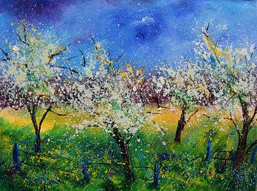 Apfelblüte von pol ledent