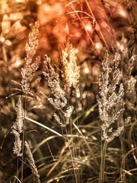 De l'herbe à la lumière sur
