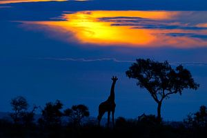 Een Giraf bij zonsondergang, Mario Moreno
