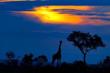 Eine Giraffe bei Sonnenuntergang, Mario Moreno von 1x