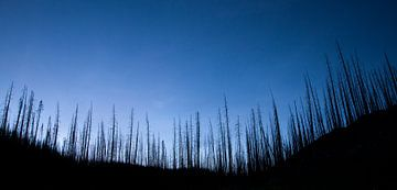 Verbrand bos sur Fotografie door Menno