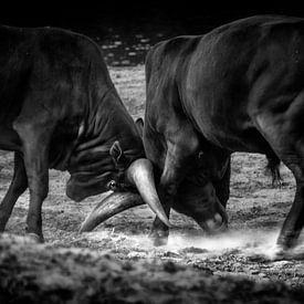 Stierengevecht van Ruud Peters