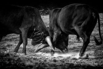 Stierkampf von Ruud Peters