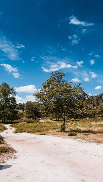 Schöner Baum im Naturschutzgebiet, Hatertse & Overasseltse Vennen von Rob van Dongen