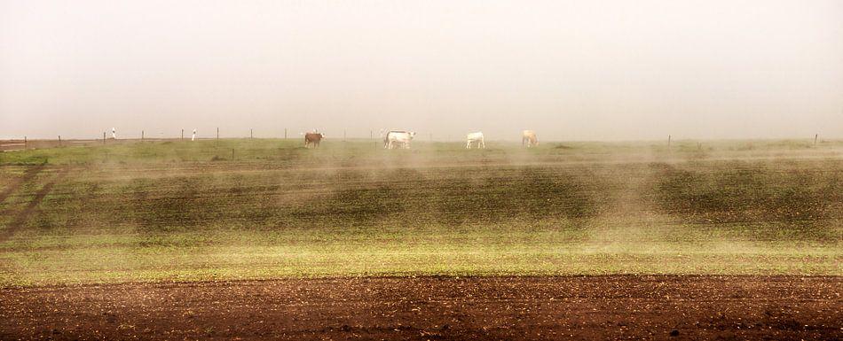 Vee in de mist