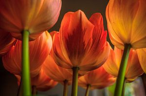 Het Tulpenboeket
