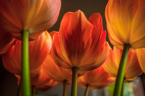 Tulpen III van Pieter Navis