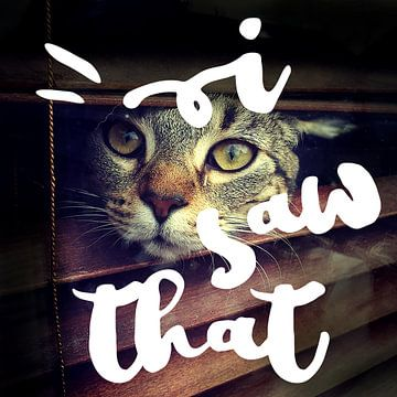 I saw that | Kat