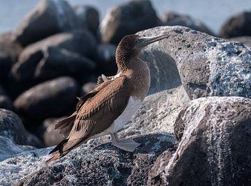 Isla Lobos van Maarten Verhees