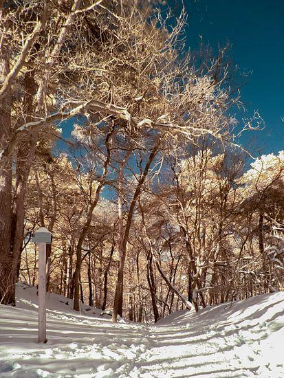 Bospad in de sneeuw