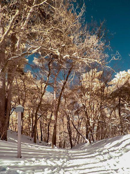 Bospad in de sneeuw van Lex Schulte