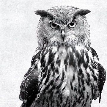 Black and White Owl van David Potter