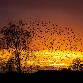 Starling Sonnenuntergang 2 von Yvonne van der Meij