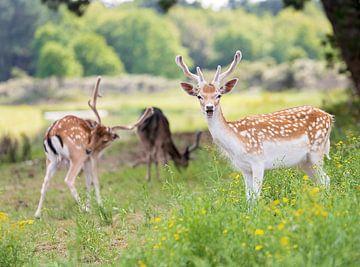 Bambi met vriendjes van Anouschka Hendriks