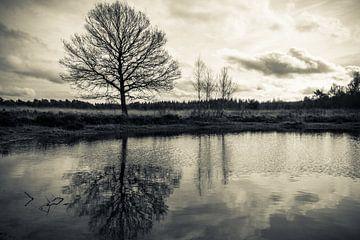 Reflectie van boom in een ven von Jeroen Maas