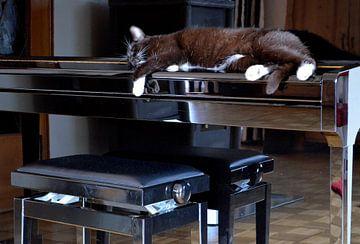Der Klavierkater von nebenan sur bernd hiep