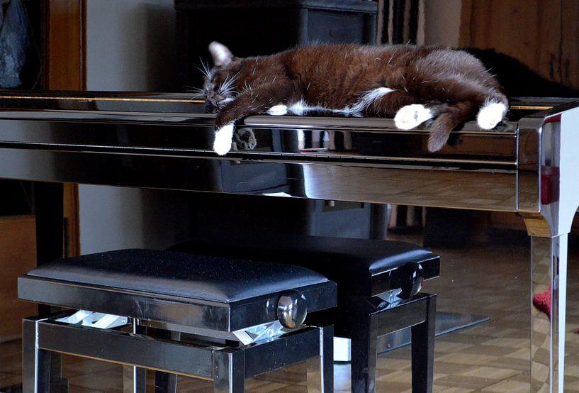 Der Klavierkater von nebenan van bernd hiep