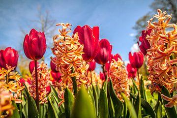 Fleurig bloemenveld van Stedom Fotografie