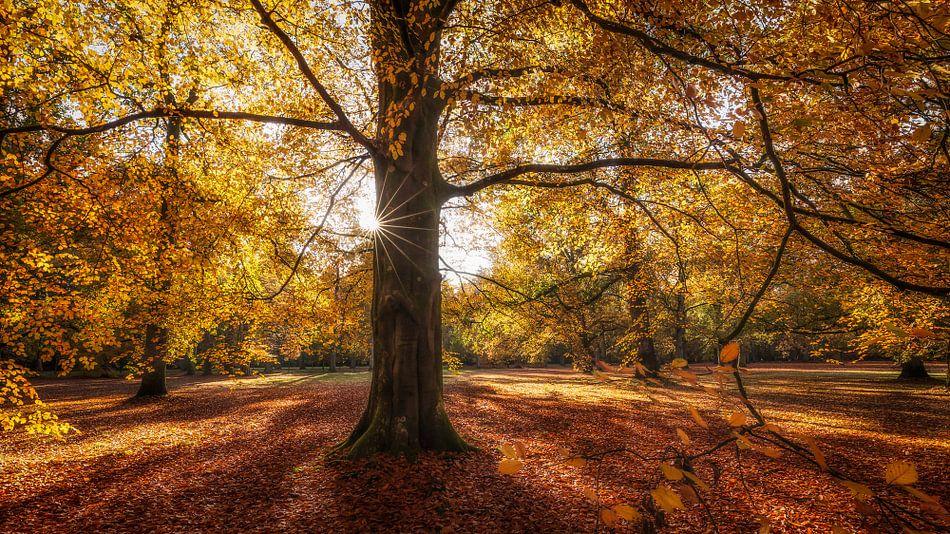 Gouden herfstkleuren